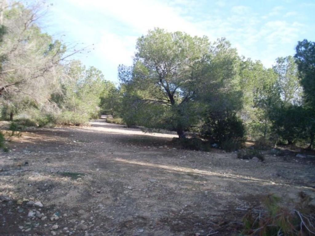 Land in San Miguel De Salinas
